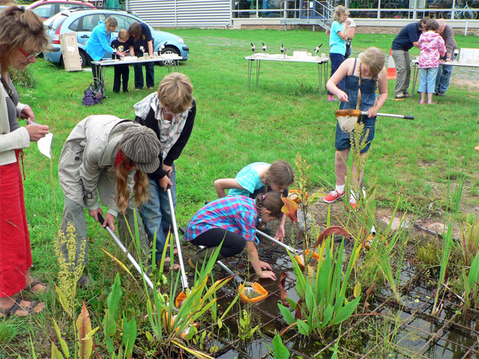 Summer Holiday Pond Dipping